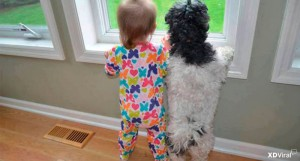 16 pictures of adorables Babies and Pets