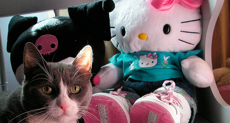 The 5 secrets of Hello Kitty do not know