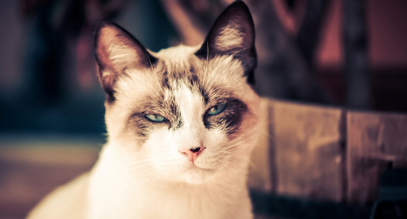 9 things that you did not know about cats
